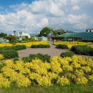 Ogród na dachu BUW ma 2 tys. m² powierzchni. Podzielony jest na cztery części: złotą, srebrną, karminową i zieloną. Rośliny, które tam zasadzono różnią się od tych, znajdujących się na dachu sąsiedniego budynku - gmachu wydziałów lingwistycznych.  Z obu widać jednak panoramę Warszawy. Fot. M. Kaźmierczak
