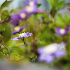 Niebiesko-fioletowe powojniki rosną na wysokości 16 m nad ziemią. Ozdabiają dach budynku przy ul. Dobrej 55. Rosną tu też tawuły japońskie, w sumie na ponad 800 metrowej powierzchni zasadzono ponad 1300 roślin.