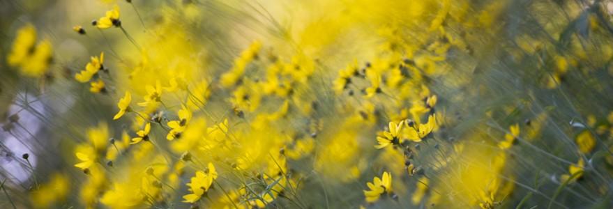 Kwiaty w Ogrodzie Botanicznym UW, fot. M. Kaźmierczak