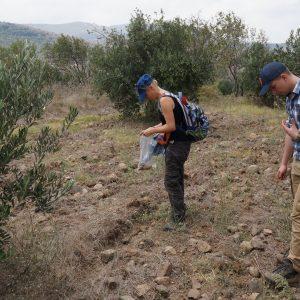 Badania powierzchniowe w gaju oliwnym na tarasach poniżej stanowiska archeologicznego. Fot. S. Rempel