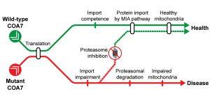 Źródło: EMBO Molecular Medicine