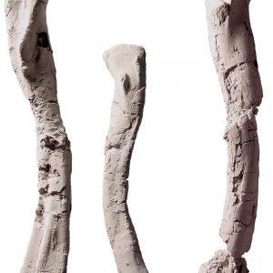 Kości udowe Silesaurus.