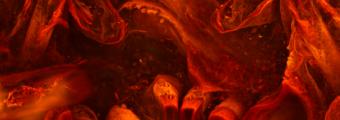 Fragment części gębowej stawonoga Heterocrania rhyniensis. Zdjęcie wykonane zostało za pomocą mikroskopu konfokalnego. Przedstawione na nim pole widzenia odpowiada ok. 0,3 mm szerokości w rzeczywistości. Fot. dr Christine Strullu-Derrien, dr Tomasz Góral.