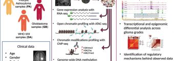 """Experimental workflow. Źródło: """"Mapping chromatin accessibility and active regulatory elements reveals pathological mechanisms in human gliomas""""/""""Nature Communications""""."""